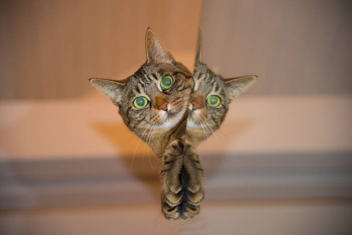 Gato (Foto: Pixabay)
